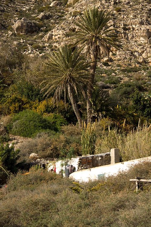Casa con dos palmeras en la cala San Pedro